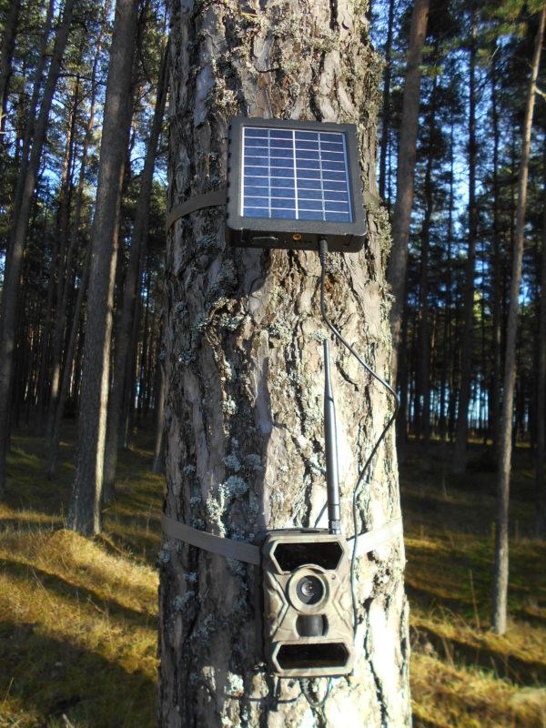Päikesepaneel ja 3g rajakaamera puu küljes