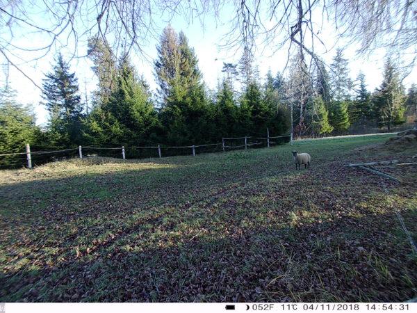 3g rajakaamera 3.0cg, lammas