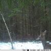 rajakaamera 2.8c metskits