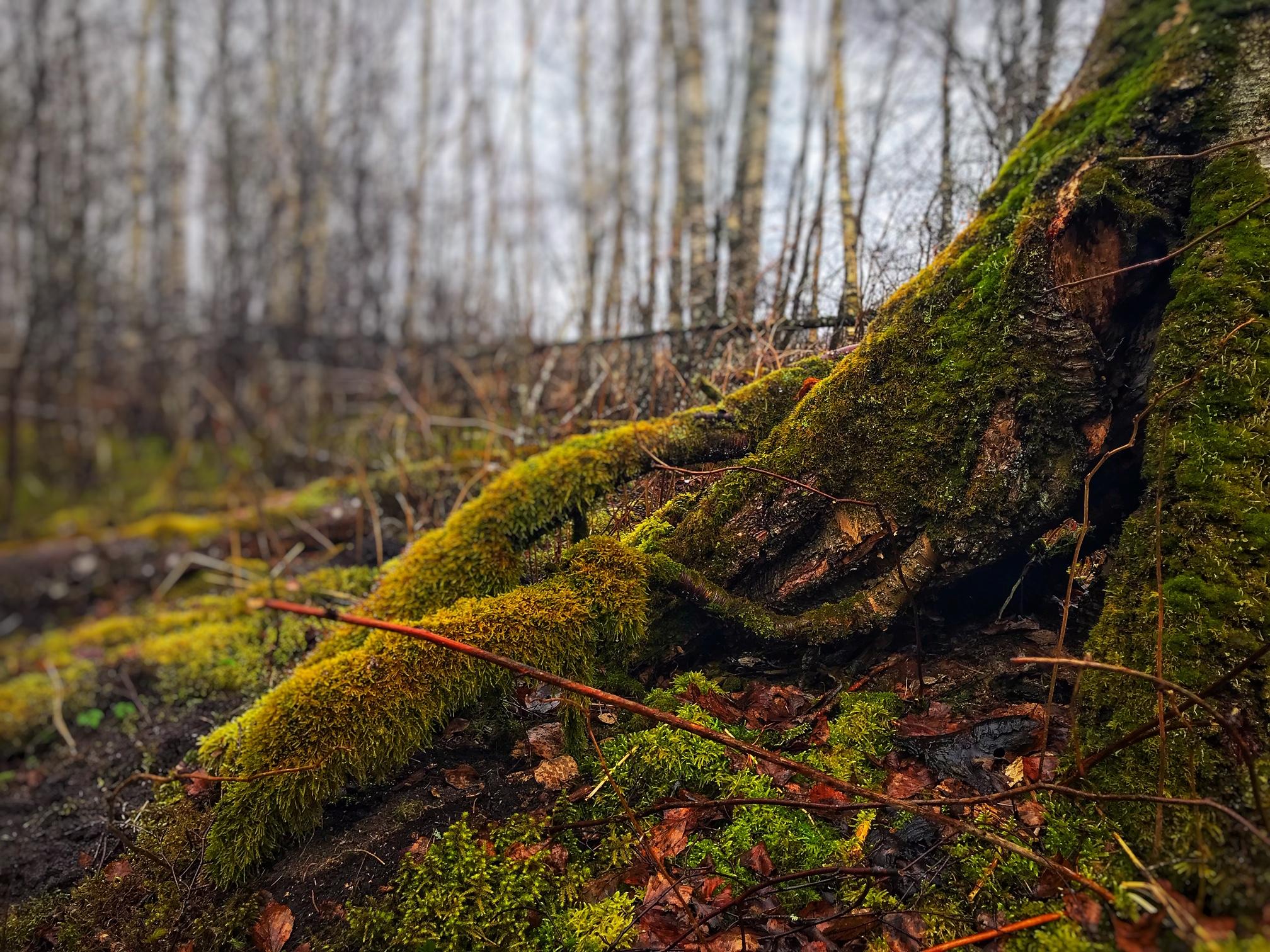 kevadine_mets